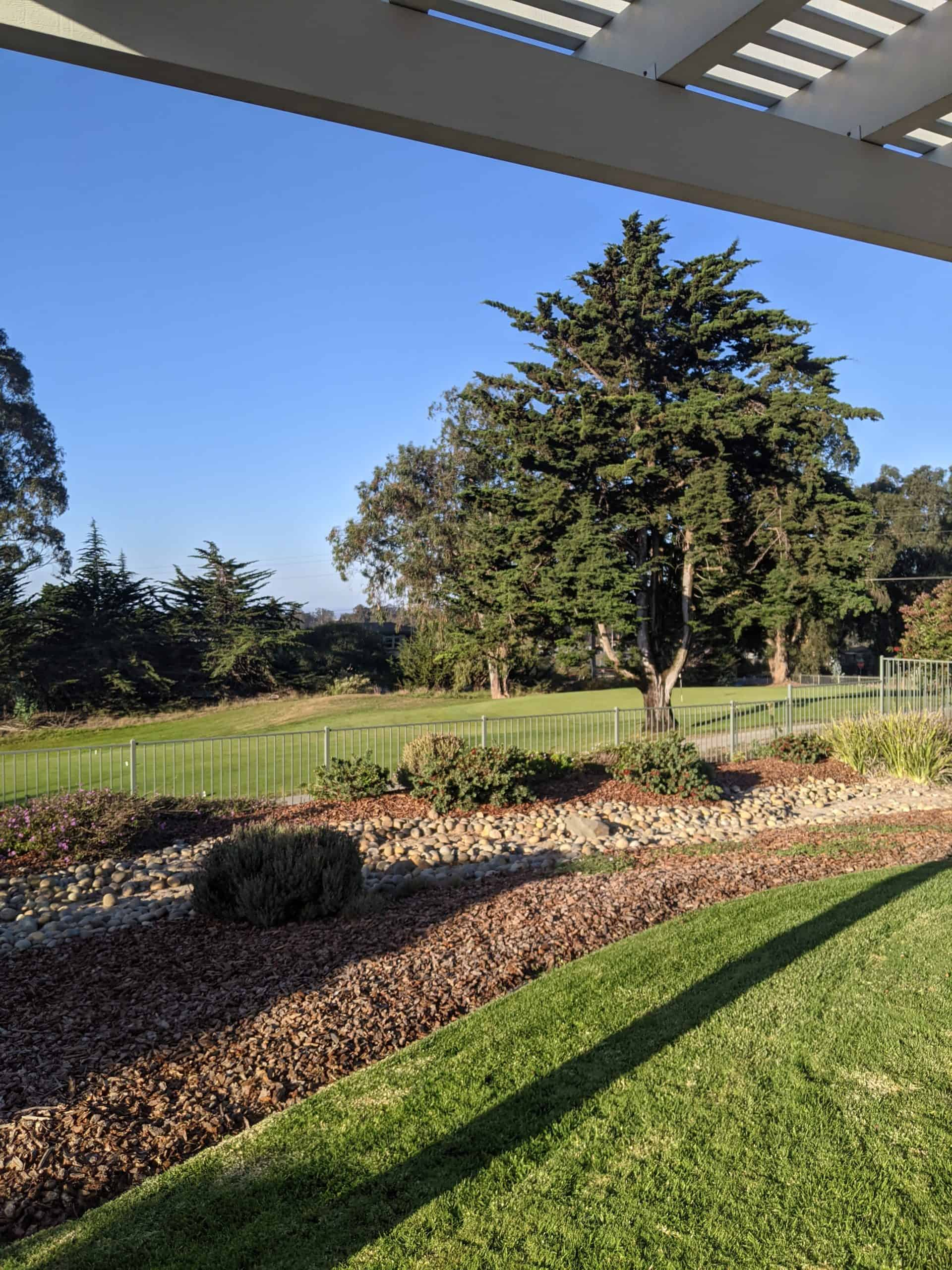 Backyard overlook green